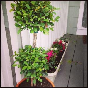Porch Gardening!
