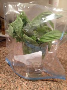Basil Greenhouse