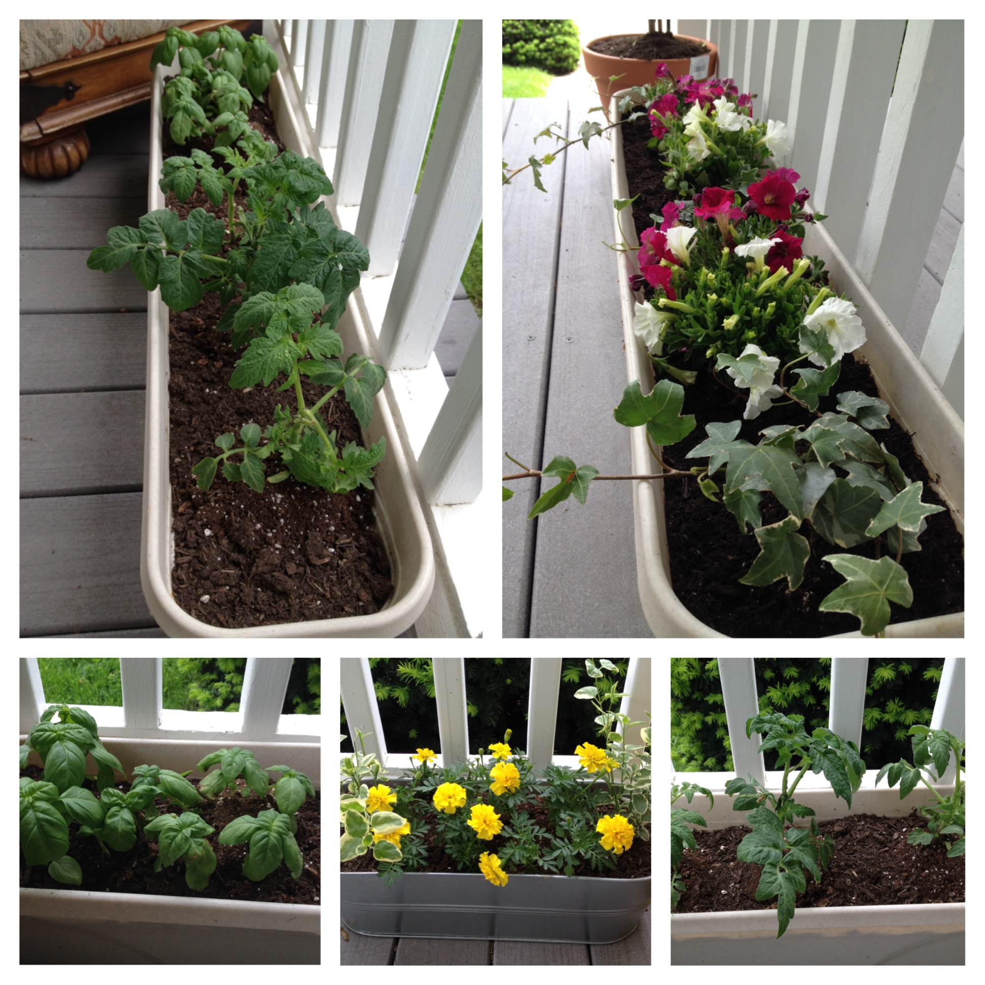 Small Space Gardens