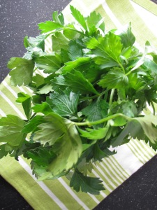 Parsley ready for its close up!